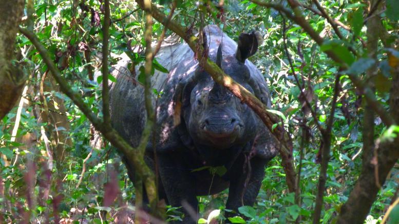 Parc de Chitwan